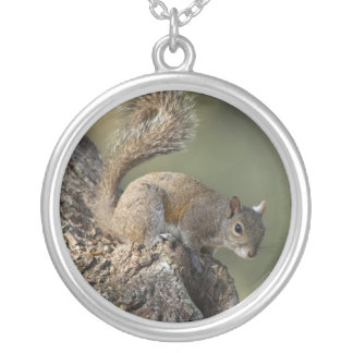 Eastern Gray Squirrel, or grey squirrel Silver Plated Necklace