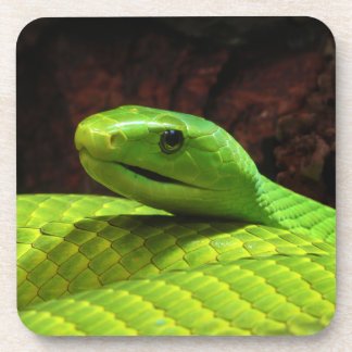 Eastern Green Mamba Dendroaspis Angusticeps Beverage Coasters