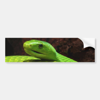 Eastern Green Mamba Dendroaspis Angusticeps Bumper Sticker