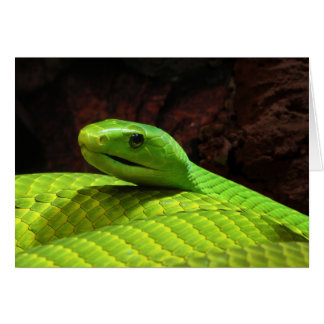 Eastern Green Mamba Dendroaspis Angusticeps Greeting Card