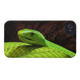 Eastern Green Mamba Dendroaspis Angusticeps iPhone 4 Case-Mate Case