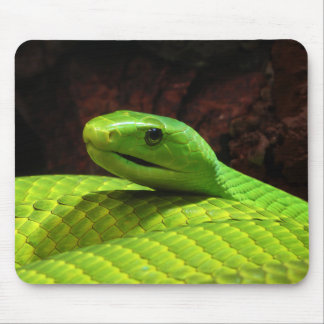 Eastern Green Mamba Dendroaspis Angusticeps Mouse Pad