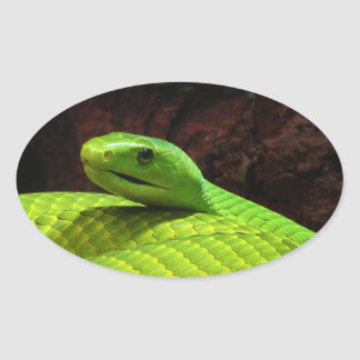 Eastern Green Mamba Dendroaspis Angusticeps Oval Sticker