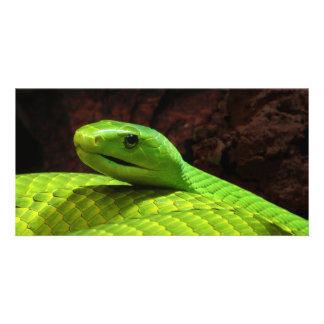Eastern Green Mamba Dendroaspis Angusticeps Personalised Photo Card