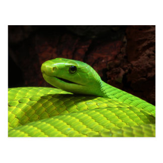 Eastern Green Mamba Dendroaspis Angusticeps Postcard