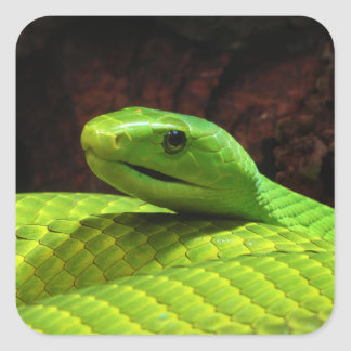 Eastern Green Mamba Dendroaspis Angusticeps Square Sticker