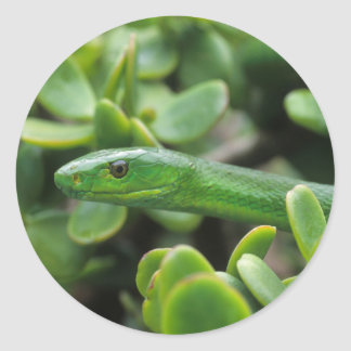 Eastern Green Mamba (Dendroaspis Angusticeps) Round Sticker