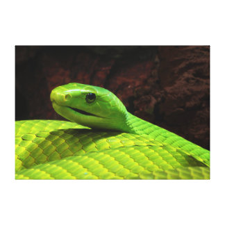Eastern Green Mamba Dendroaspis Angusticeps Stretched Canvas Prints