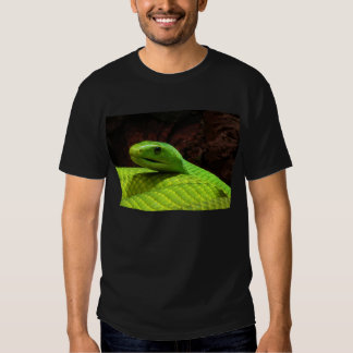 Eastern Green Mamba Dendroaspis Angusticeps Tees