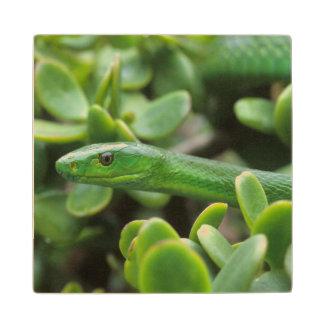 Eastern Green Mamba (Dendroaspis Angusticeps) Wood Coaster