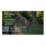 Eastern grey kangaroo and cat, Australia fl Business Card Template