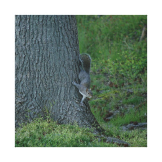 Eastern Grey Squirrel, Canvas Print. Canvas Print