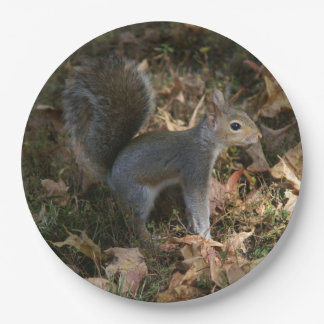 Eastern Grey Squirrel, Paper Plates. Paper Plate