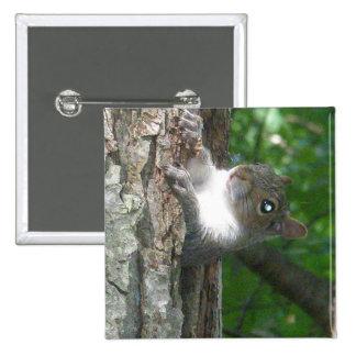 Eastern Grey Squirrel (Sciurus carolinensis) Items 15 Cm Square Badge