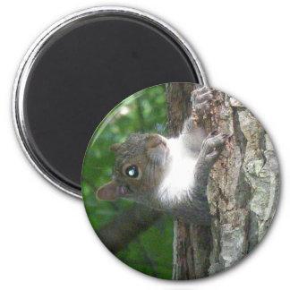 Eastern Grey Squirrel (Sciurus carolinensis) Items 6 Cm Round Magnet