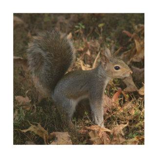 Eastern Grey Squirrel, Wood Photo Print. Wood Wall Art