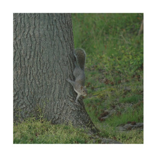 Eastern Grey Squirrel, Wood Photo Print. Wood Wall Art