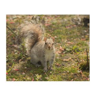 Eastern Grey Squirrel Wood Wall Art