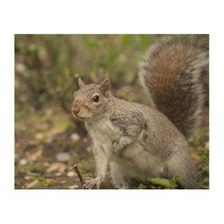 Eastern Grey Squirrel Wood Wall Decor