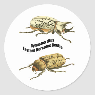 Eastern Hercules Beetle Classic Round Sticker