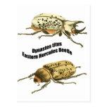 Eastern Hercules Beetle Post Cards