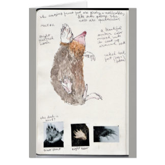 eastern mole nature journal page card
