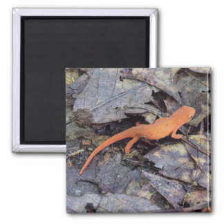 Eastern Newt Fridge Magnets
