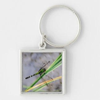 Eastern Pondhawk Dragonfly Keychain