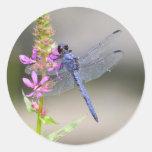 Eastern Pondhawk Round Sticker