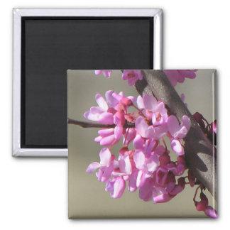 Eastern Redbud Blooms Square Magnet