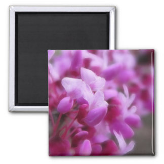 Eastern Redbud Flowers Square Magnet
