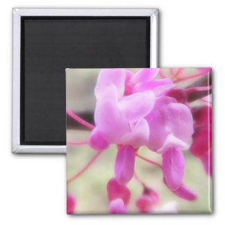 Eastern Redbud - Up Close Square Magnet