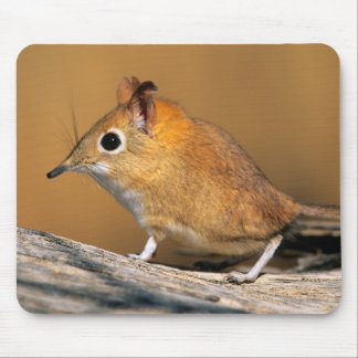 Eastern Rock Elephant Shrew on lo Mouse Mat