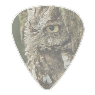 Eastern Screech Owl Gray Phase) Otus asio, Acetal Guitar Pick