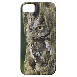 Eastern Screech Owl (Gray Phase) Otus asio Barely There iPhone 5 Case