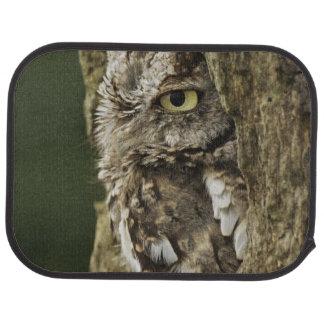 Eastern Screech Owl Gray Phase) Otus asio, Car Mat