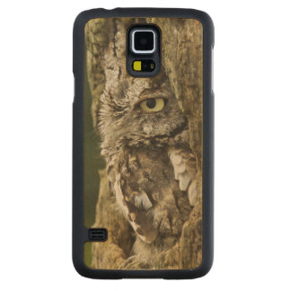 Eastern Screech Owl Gray Phase) Otus asio, Carved Maple Galaxy S5 Case