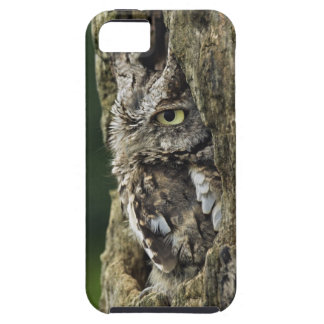 Eastern Screech Owl (Gray Phase) Otus asio Case For The iPhone 5