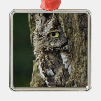 Eastern Screech Owl (Gray Phase) Otus asio Christmas Ornament