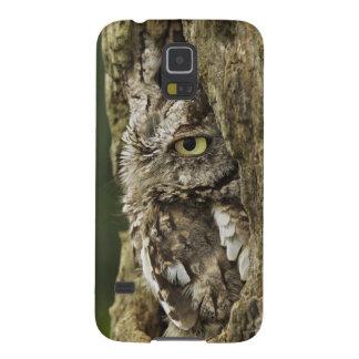 Eastern Screech Owl Gray Phase) Otus asio, Galaxy S5 Cover