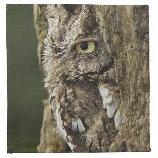 Eastern Screech Owl Gray Phase) Otus asio, Napkin