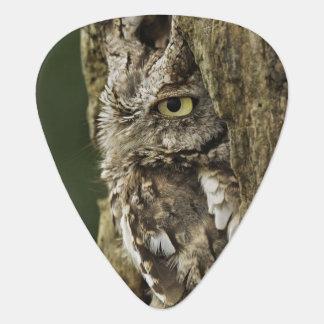 Eastern Screech Owl Gray Phase) Otus asio, Plectrum
