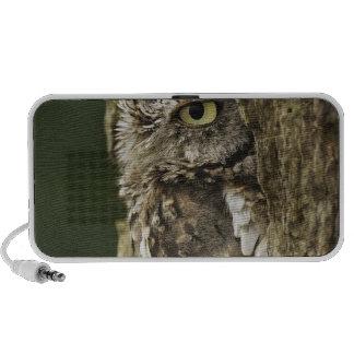 Eastern Screech Owl Gray Phase) Otus asio, Portable Speakers