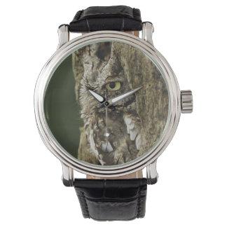 Eastern Screech Owl Gray Phase) Otus asio, Watch