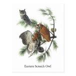 Eastern Screech Owl, John Audubon Postcard