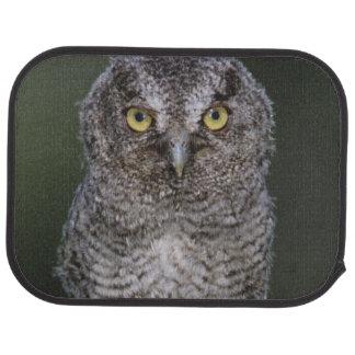 Eastern Screech-Owl, Megascops asio, Otus 2 Car Mat