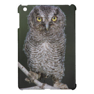 Eastern Screech-Owl, Megascops asio, Otus 2 iPad Mini Covers