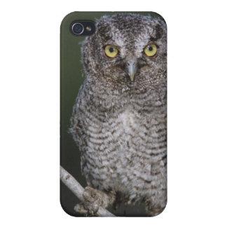 Eastern Screech-Owl, Megascops asio, Otus 2 iPhone 4/4S Cover