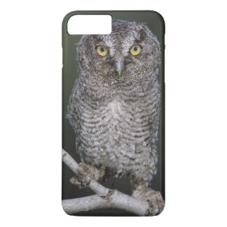 Eastern Screech-Owl, Megascops asio, Otus 2 iPhone 8 Plus/7 Plus Case