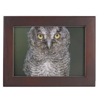 Eastern Screech-Owl, Megascops asio, Otus 2 Keepsake Box